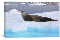 Leopard Seal Resting on an Ice Floe, Canvas Print