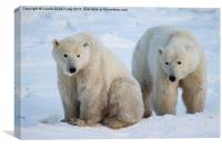 Polar Bears, Churchill, Canada, Canvas Print