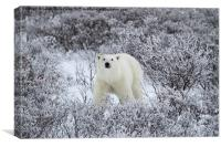 Polar Bear in The Arctic Willow, Canvas Print