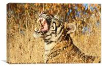 Yawn: Sub-Adult Male Bengal Tiger, Canvas Print