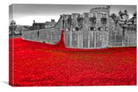 Tower of London poppy poppies, Canvas Print