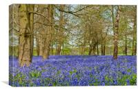 Bluebell Woods Greys Court Oxfordshire, Canvas Print