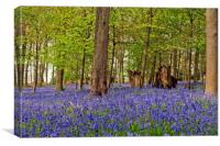 Bluebell Woods Greys Court Oxfordshire England UK, Canvas Print
