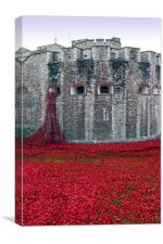 Tower of London poppy Blood Swept Lands, Canvas Print