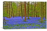 Bluebell Woods Greys Court Oxfordshire England, Canvas Print
