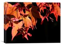 Japanese Acer, Canvas Print