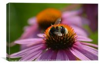 Bee on PInk Flower, Canvas Print
