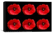 Six Red Poppies on Black Background, Canvas Print