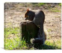 Hungry Squirrel, Canvas Print