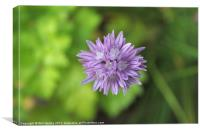Chive Flower From Above, Canvas Print