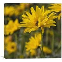 Yellow Flower with Texture, Canvas Print