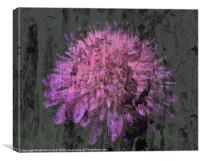 Textured Scabia, Canvas Print