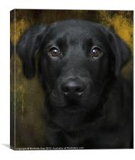 Black Lab Pup, Canvas Print