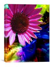 Psychedelic Daisy, Canvas Print