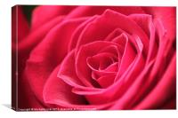 Perfect in Pink, Canvas Print