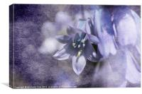 Bluebell with Texture, Canvas Print
