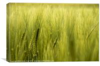 In the Wheatfield, Canvas Print