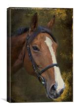 Brown Beauty, Canvas Print