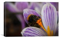 Sprig Bee In Action, Canvas Print
