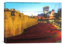 The Tower of London Poppies, Canvas Print