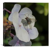 Fly on Petal, Canvas Print