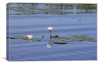 Water Lilies, Canvas Print