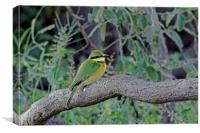 Little Bee Eater, Canvas Print