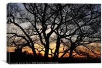Sunset at Greenwich Park, London  , Canvas Print