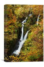 Stock Ghyll Force, Canvas Print