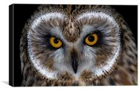 Short Eared Owl, Canvas Print