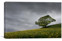 Lone tree on the Kent downs. , Canvas Print
