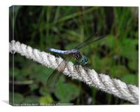 Dragonfly's Rope., Canvas Print