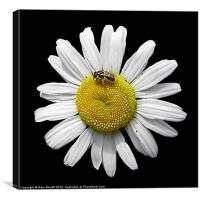 Bee Loves Me Loves Me Not, Canvas Print