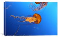 Jelly Of The Deep., Canvas Print