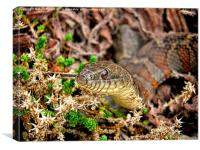 A Snake In The Moss, Canvas Print