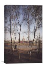 St.Pauls Cathedral Framed by Silver Birch, Canvas Print