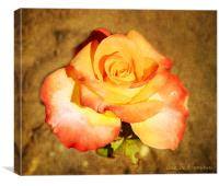 rose de  l amour, Canvas Print
