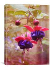Fuschia, Canvas Print