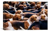 A Pack of fox Hounds., Canvas Print