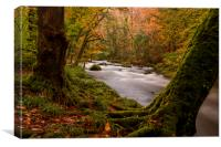 River Teign, Dartmoor, Devon. UK, Canvas Print