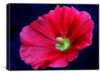 2228-*red flower, Canvas Print