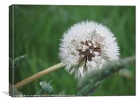 Fairy Dandelion Flower, Canvas Print