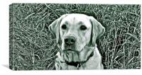 Labrador photograph black & white, Canvas Print