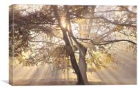 Tree, sun rays, early mist, Canvas Print