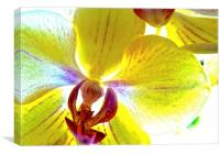 Retro Orchid Flower, Canvas Print