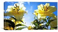 Lily's reaching for the sky, Canvas Print