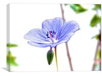 Small Purple Little Flower Geranium, Canvas Print