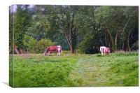 Grazing Cows on Chorleywood Common in Hertfordshi, Canvas Print