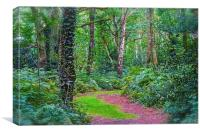 Woodland Area in Chorlywood Common in Hertfordshir, Canvas Print