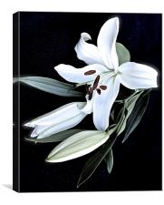 A Stem of White Lilies, Canvas Print